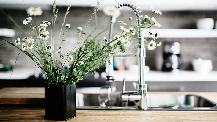 Plant in the Kitchen