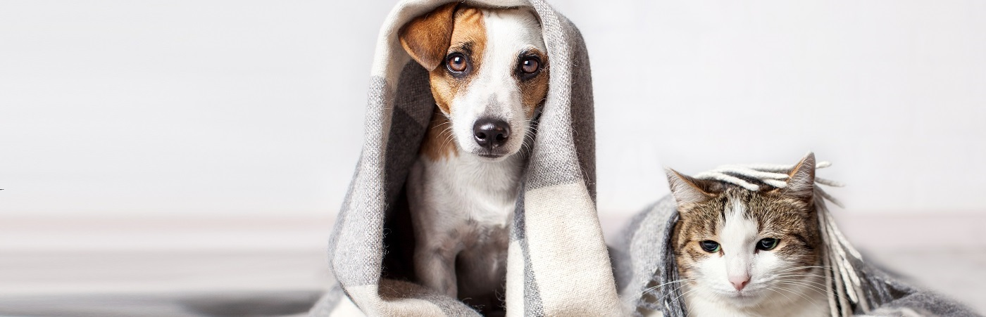 insurance - pet - resources - images - IMG RESP - kitten and puppy with blanket over their heads 1400x450