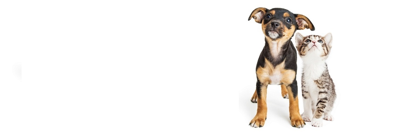 insurance - pet - resources - images - puppy and kitten on white background 1400 x 450 - Image