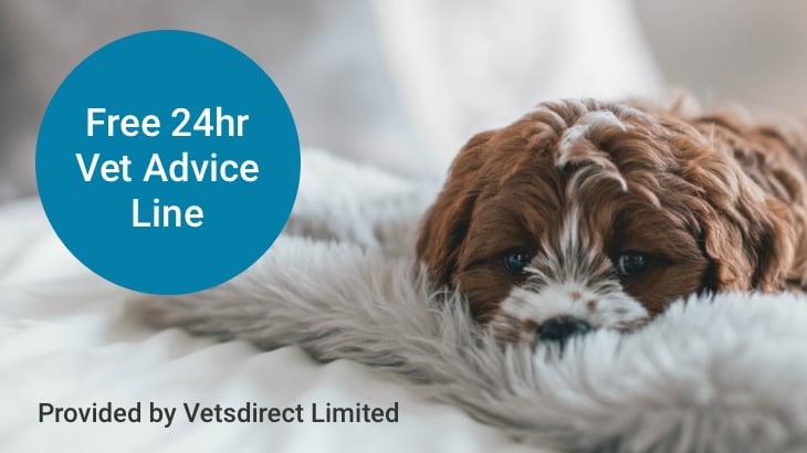 Dog insurance | Pet Insurance | Legal & General