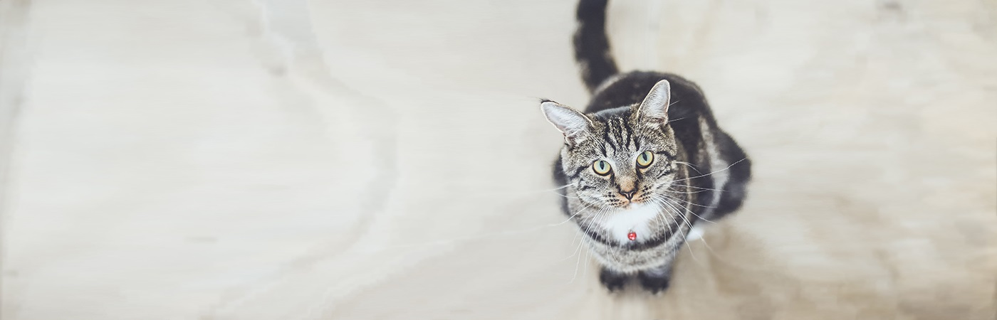 insurance - pet - resources - images - cat looking up 1400 x 450- IMG SIMPLE