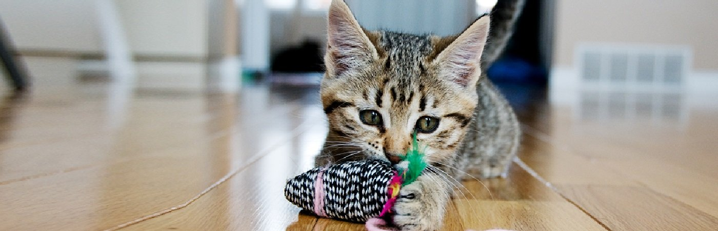 insurance - pet - resources - images - kitten playing with a toy 1400 x 450- IMG SIMPLE